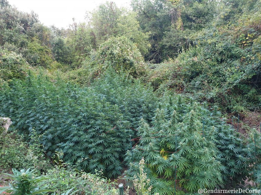 Rapale : 19 kilos de cannabis saisis par les gendarmes