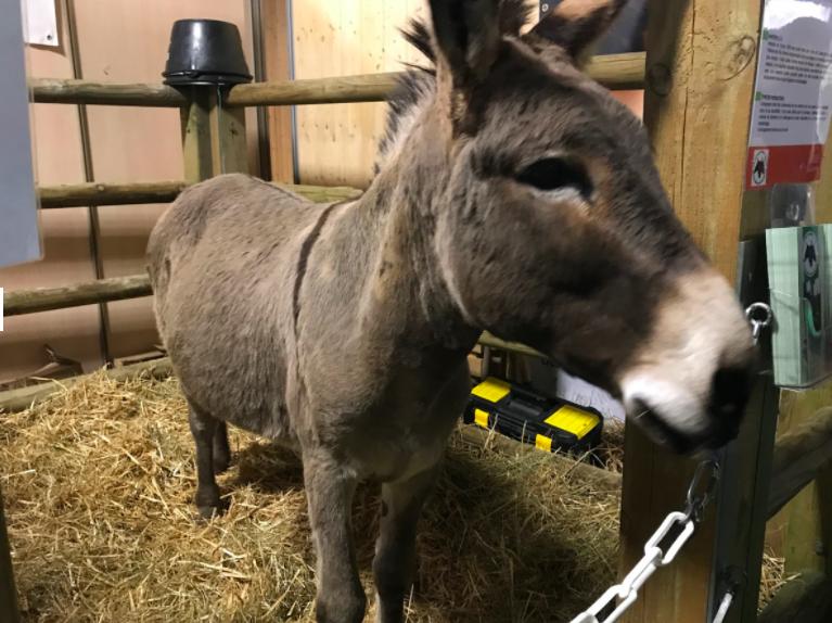 L'âne corse avait été primé au concours 2019.  Cette année à cause de la crise sanitaire, les concours animaux sont reportés à 2022