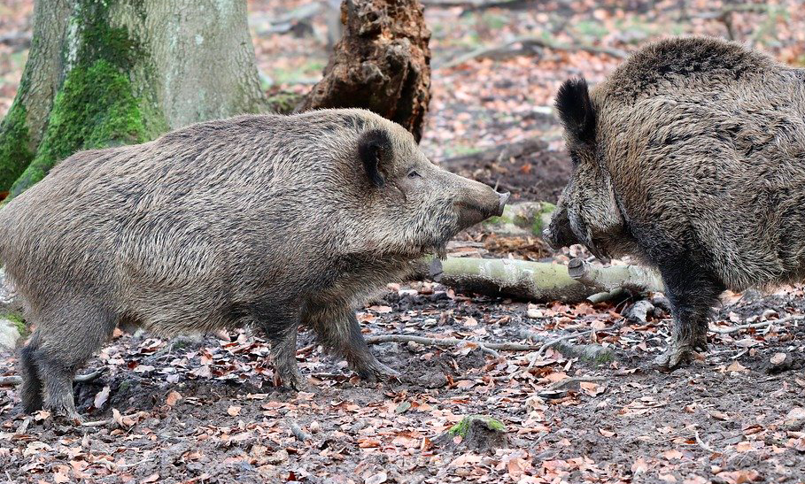 Les chasseurs de Corse-du-Sud appellent au rassemblement ce vendredi 13 novembre