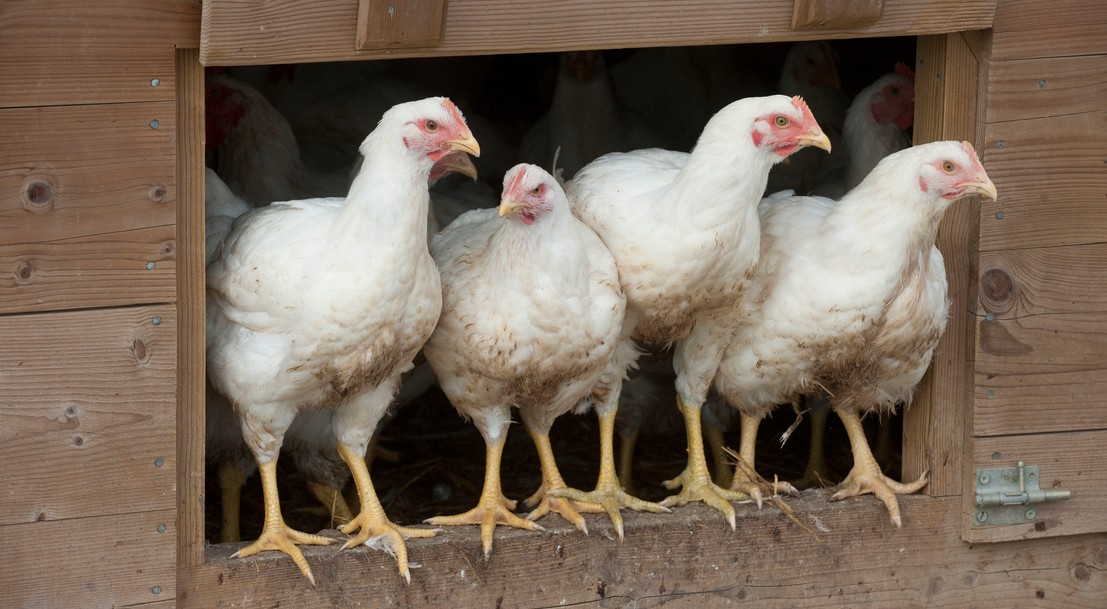 Cheick Saidou / agriculture.gouv.fr