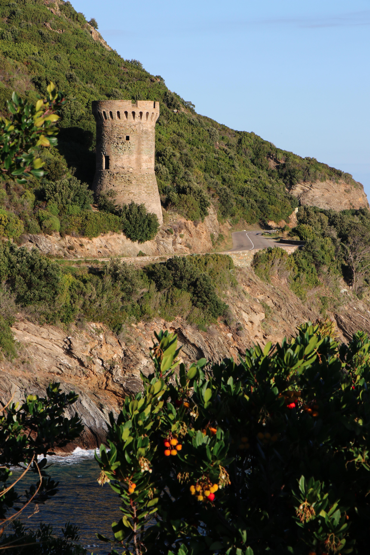La photo du jour : la tour de Losse et les arbousiers du Cap Corse