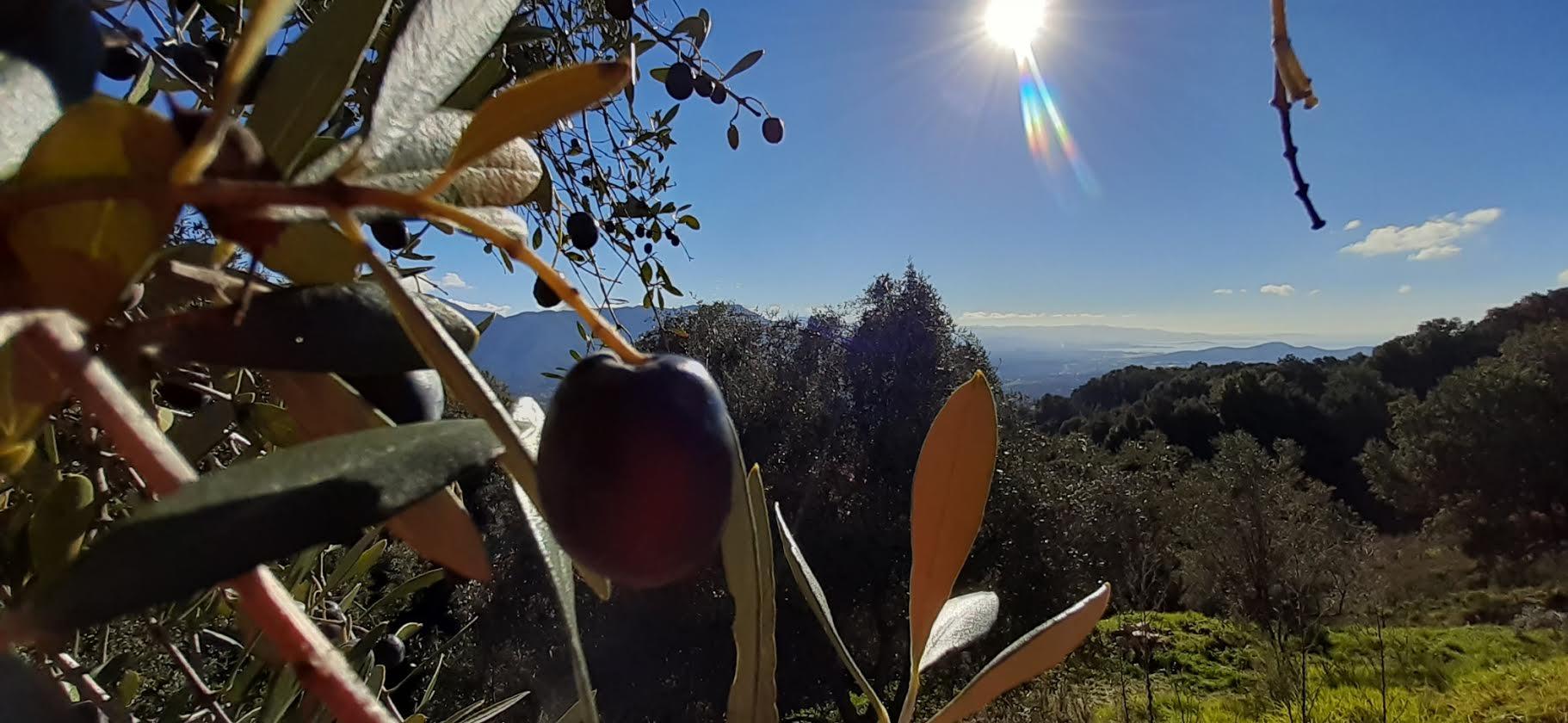 Sarrula Carcupinu...U sole, u mare e l aliva... (Nunzia-Maria Vesperini-Lugrezi )