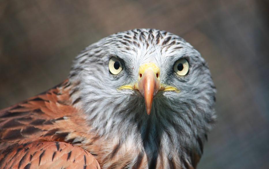 Espèces en danger : le conservatoire d'espaces naturels corse appelle aux dons