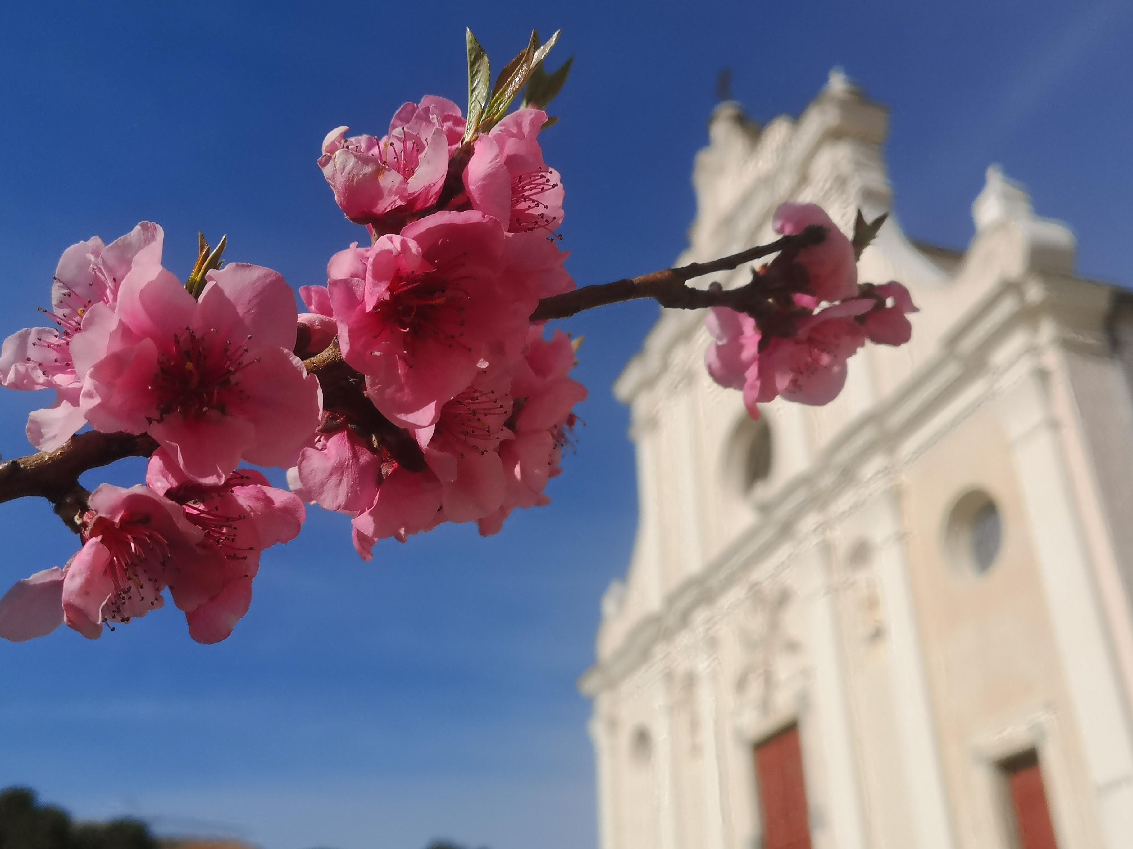 Le printemps arrive à Corbara (Stéphanie Ingram)