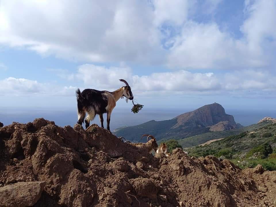 La photo du jour : rencontre magique au Capu Rossu