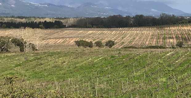 Domaine de Casabianca : Des lots agricoles ont été attribués à 25 jeunes agriculteurs