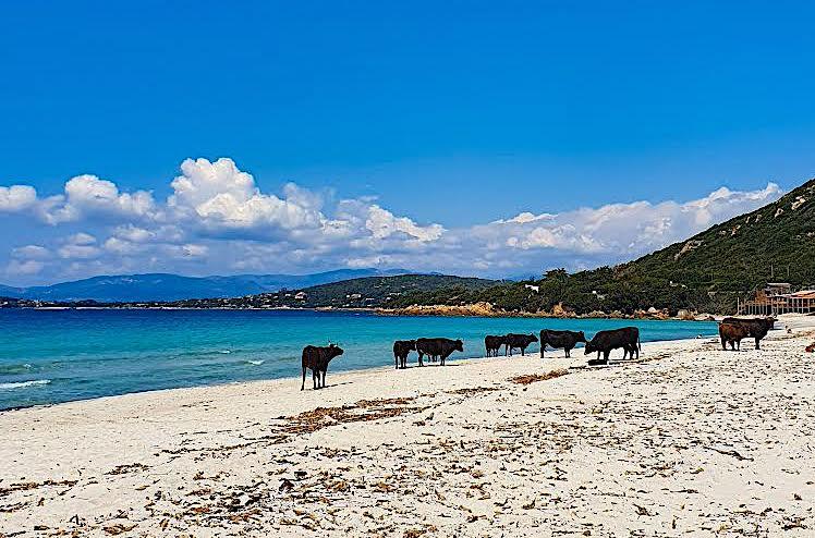 La photo du jour : les bêtes de la plage d'Argent