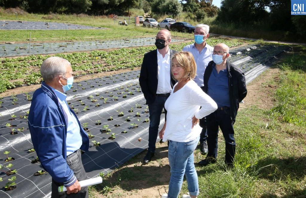Les élus du Fium'Orbu découvrent la pépinière d'entreprise agricole d'Ajaccio, chemin de la Sposata. Photo : Michel Luccioni