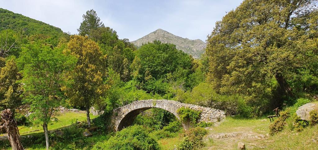 La photo du jour : d'Olmi-Cappella et Musuleu à la vallée de Tartagine