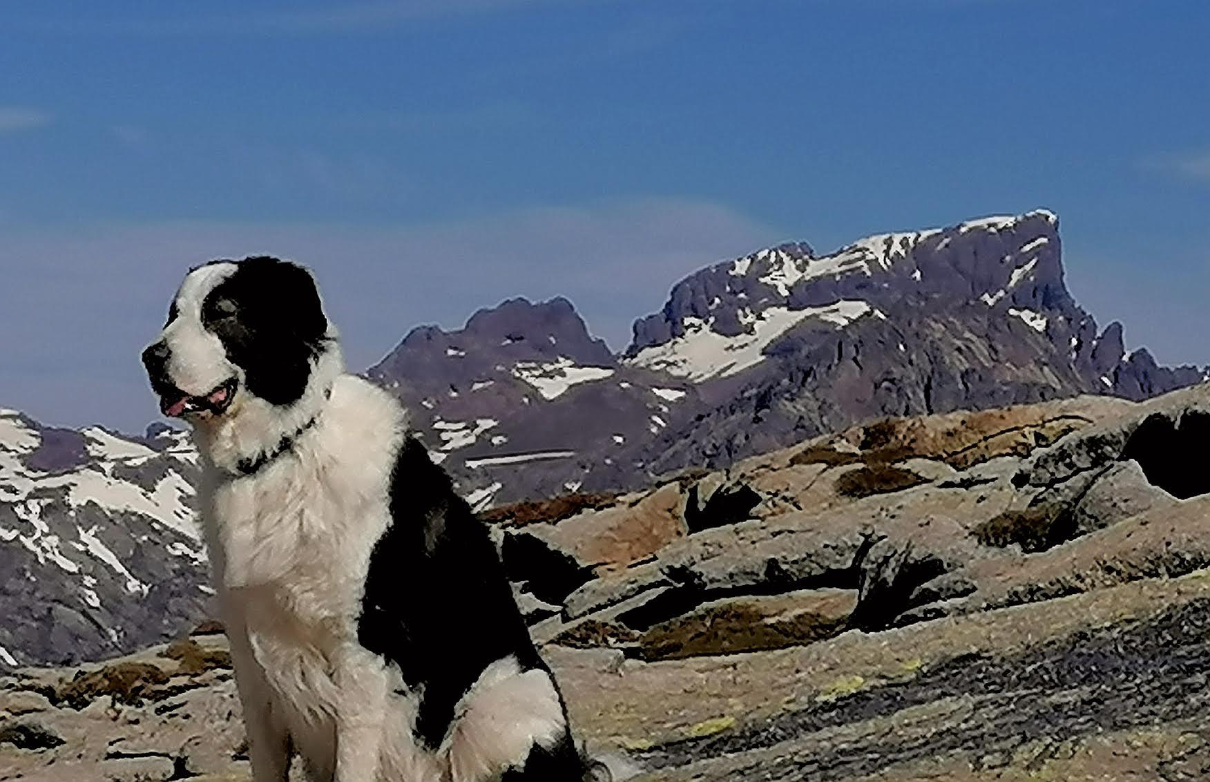 La photo du jour : Jack à Punta Artica