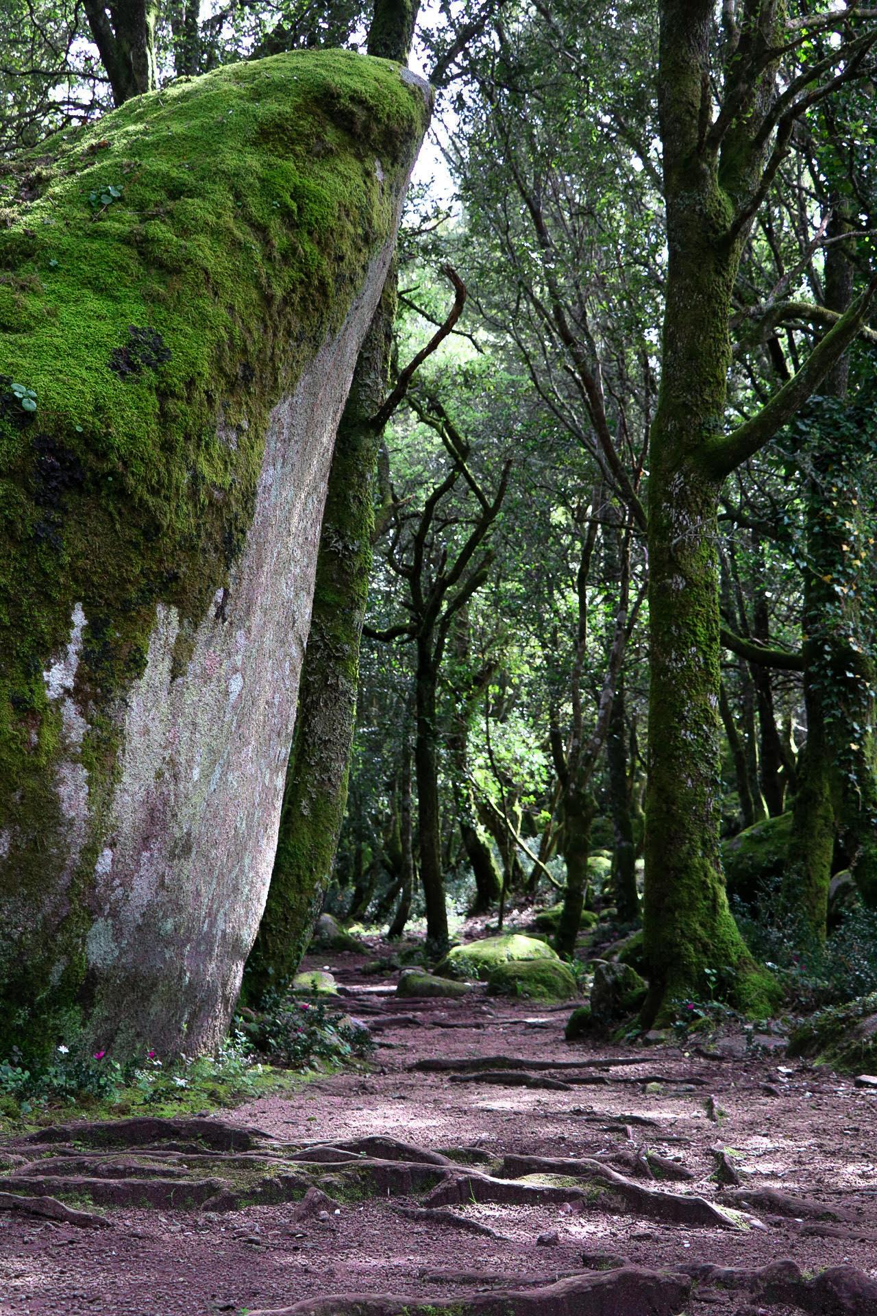 La photo du jour : le vert du site archéologique de Cucuruzzu
