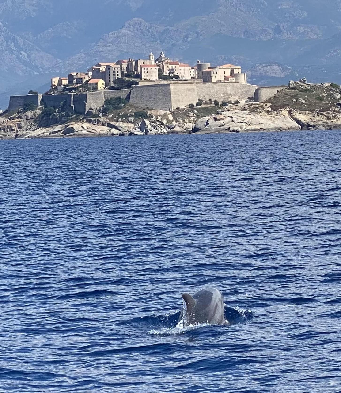 La photo du jour : le dauphin et la citadelle de Calvi