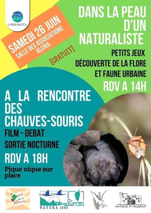Myotis nustrale, la chauve-souris endémique de Corse présentée ce samedi à Aleria