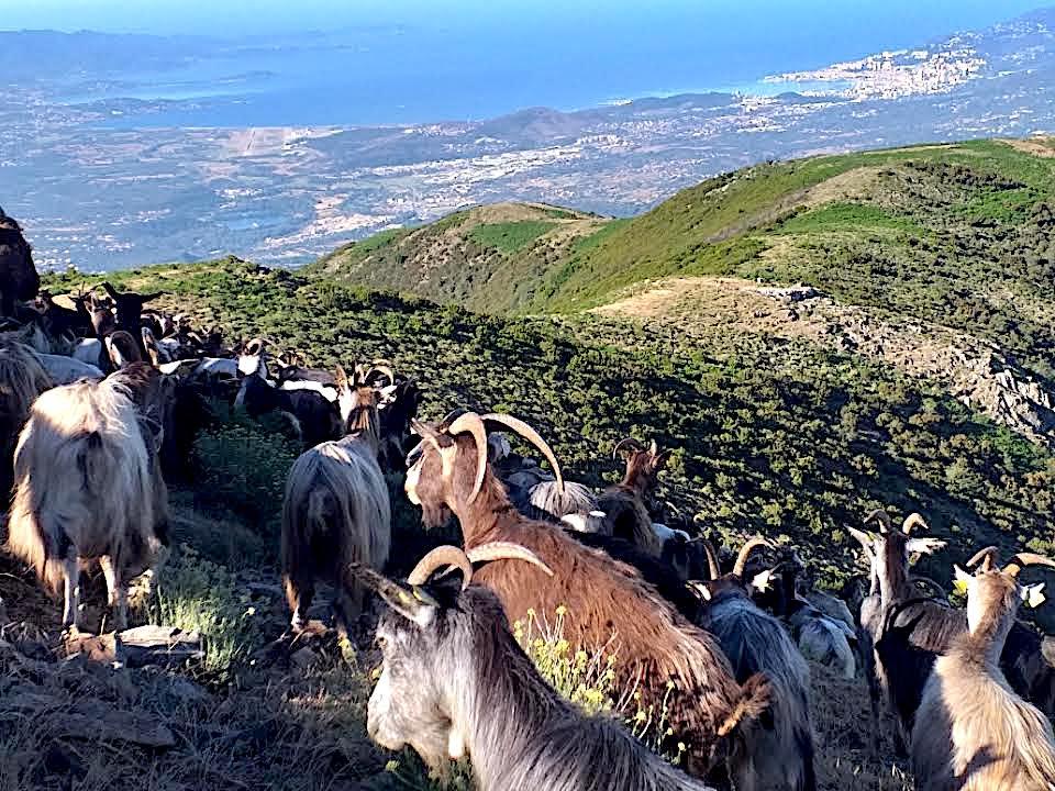 La photo du jour : sur les hauteurs de la région ajaccienne