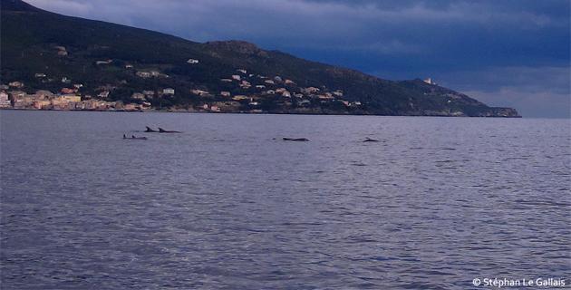 Lavasina : Rencontre avec un banc de dauphins