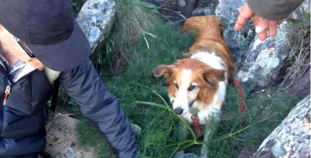 Mobilisation sur les hauteurs de Calvi pour sauver Daisy, une petite chienne tombée dans une crevasse