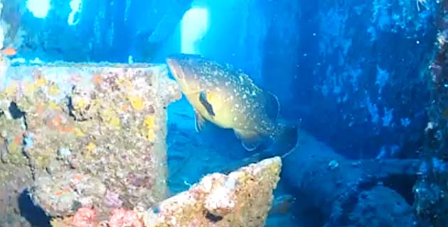 Taverna : Une balade sous-marine avec Stéphan Le Gallais