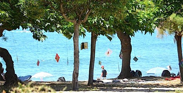"Ajaccio : La rive sud innove encore avec ""Les arbres qui lisent"""