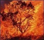 Risques d'incendie : Appel à la prudence en Balagne