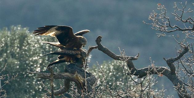 C'est le Printemps : Les oiseaux ne se cachent pas pour s'unir !
