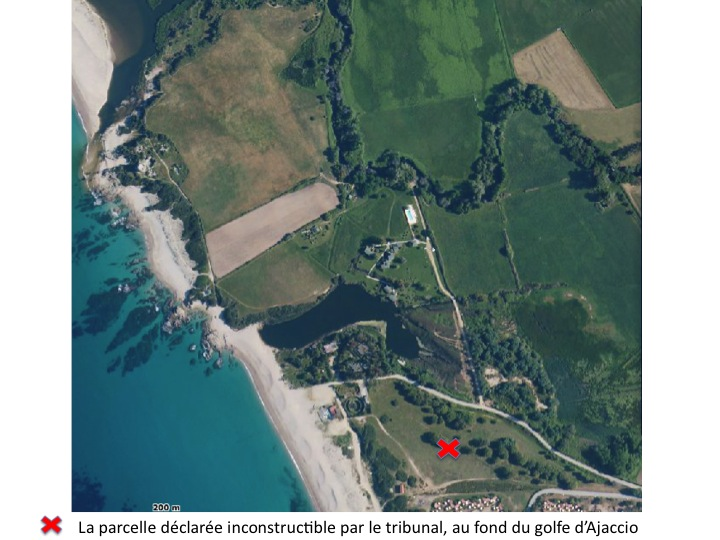 Une colonie de guêpiers d'Europe sauvée par les associations à Porticcio