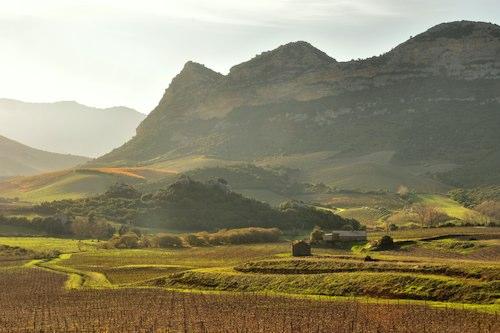 La 1ère course des vins à travers le vignoble de Patrimoniu, Poggiu d'Oletta et Barbaggio.