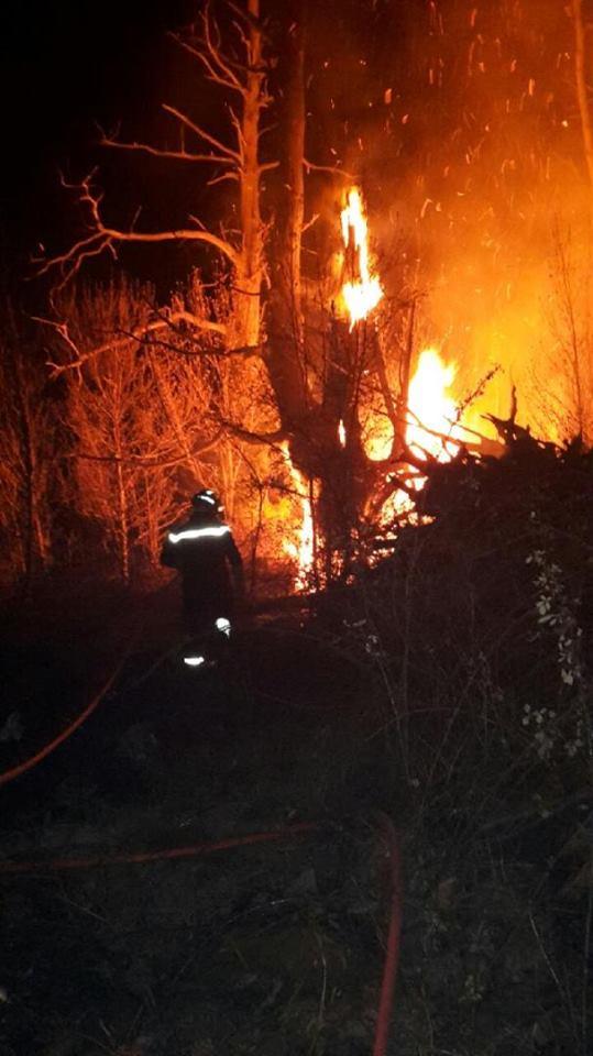 6000 m2 de châtaigniers en feu sur la commune de Soccia