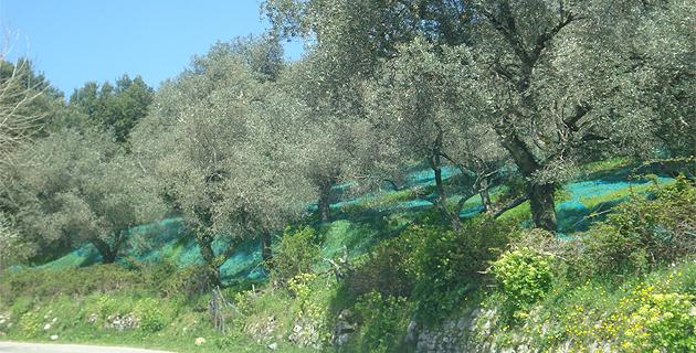 18ème Fiera di l'oliu novu : Encore deux belles journées à Santa Lucia di Talla