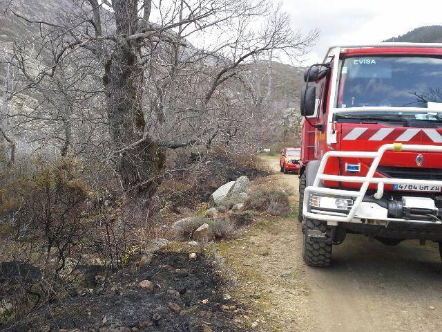 Soccia : 1 ha de châtaigniers réduit en cendres