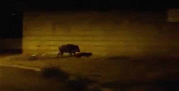 (Vidéo Bobby Sands)