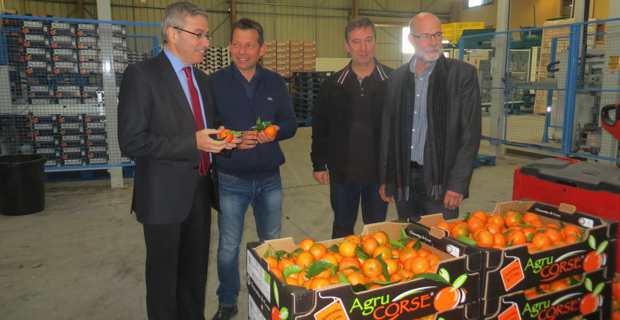 Alain Thirion, préfet de Haute-Corse, visitant la structure de conditionnement AgruCorse à Folelli, en compagnie de son directeur Mathieu Donati, des représentants de la filière et de Jean-Paul Mancel, président de l'APRODEC.