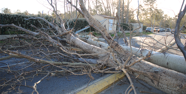 Un arbre s'est abattu sur la route de la Marana. (Photos Jean-Luc Halle-Com20)