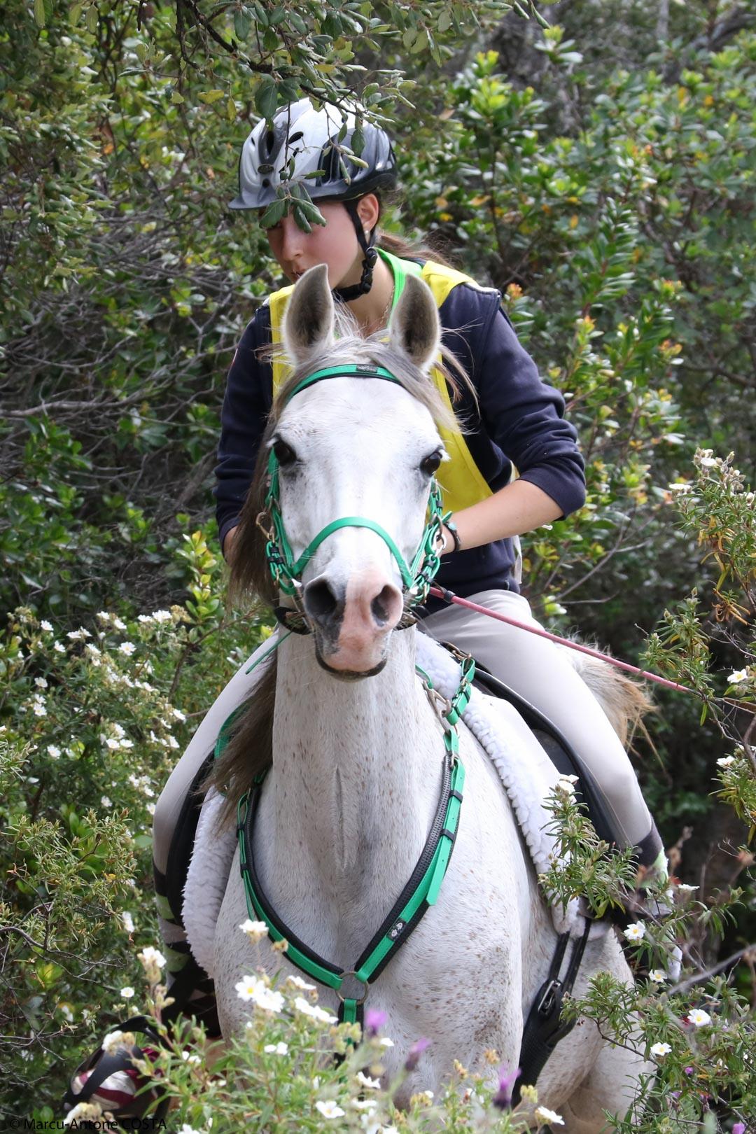 Sports équestres : Retour sur un dimanche chargé dans la région ajaccienne