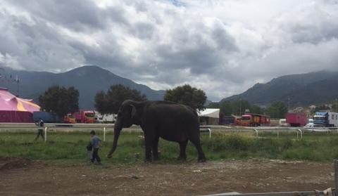 """Biguglia : Une manifestation pour dire """"stop aux cirques avec animaux"""""""