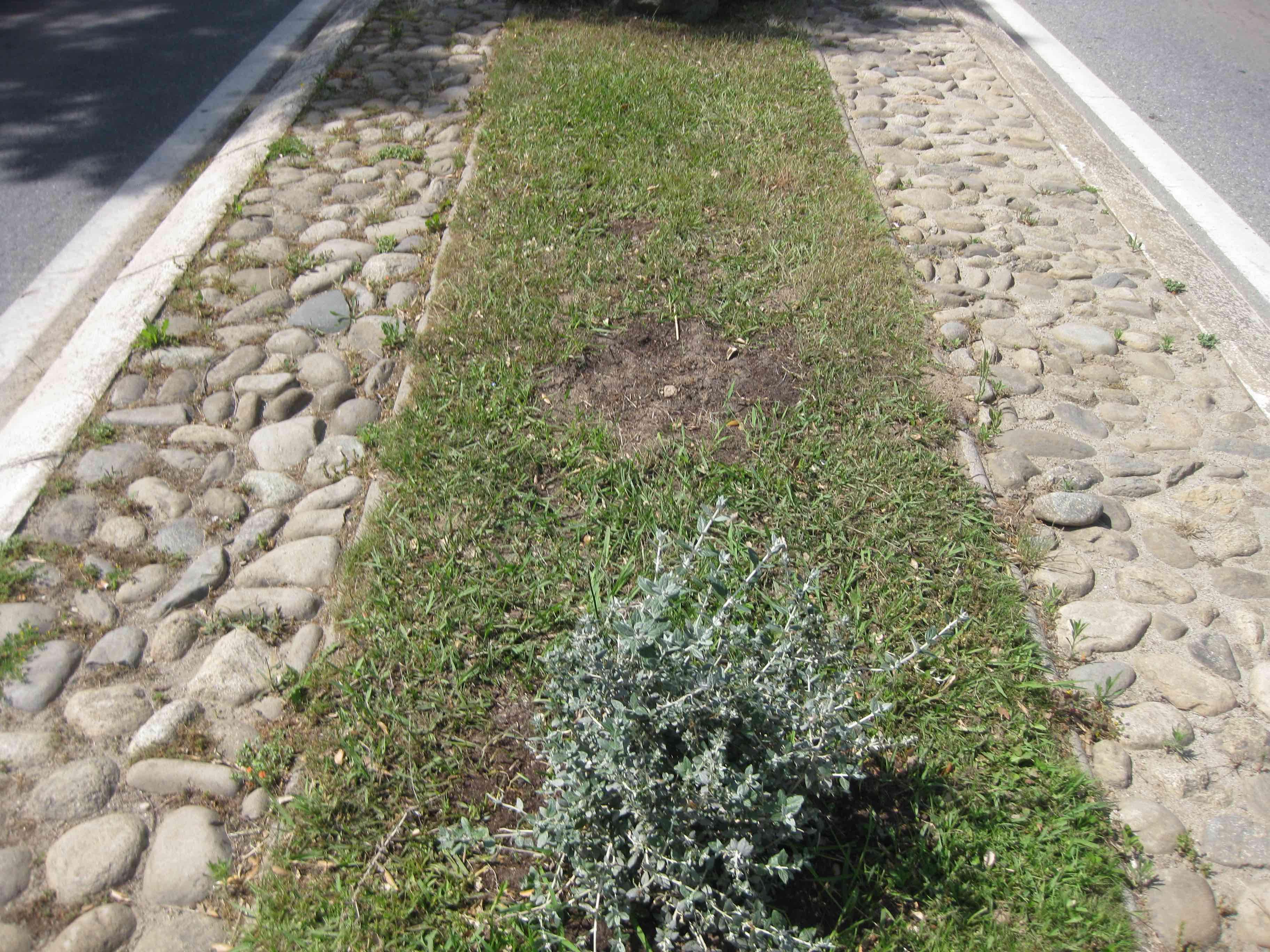 De nombreuses plantes sont ainsi dérobées.