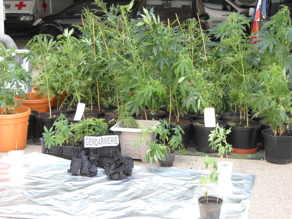 Trafic de stupéfiants entre Corte et Miomo : 10 personnes mises en examen, 5 écrouées