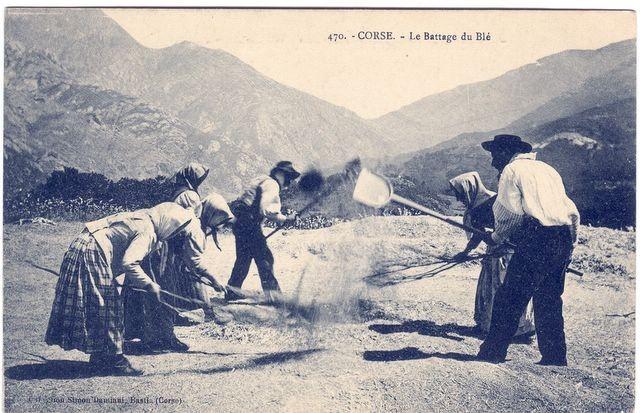 Ancienne représentation du battage du blé en Corse
