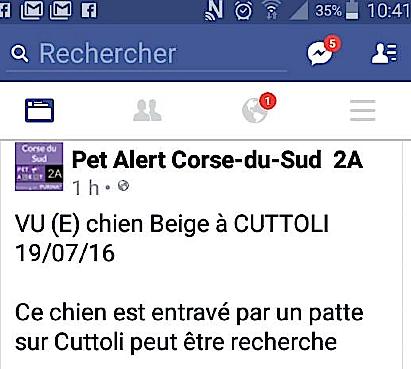 Un chien pris au piège à Cuttoli
