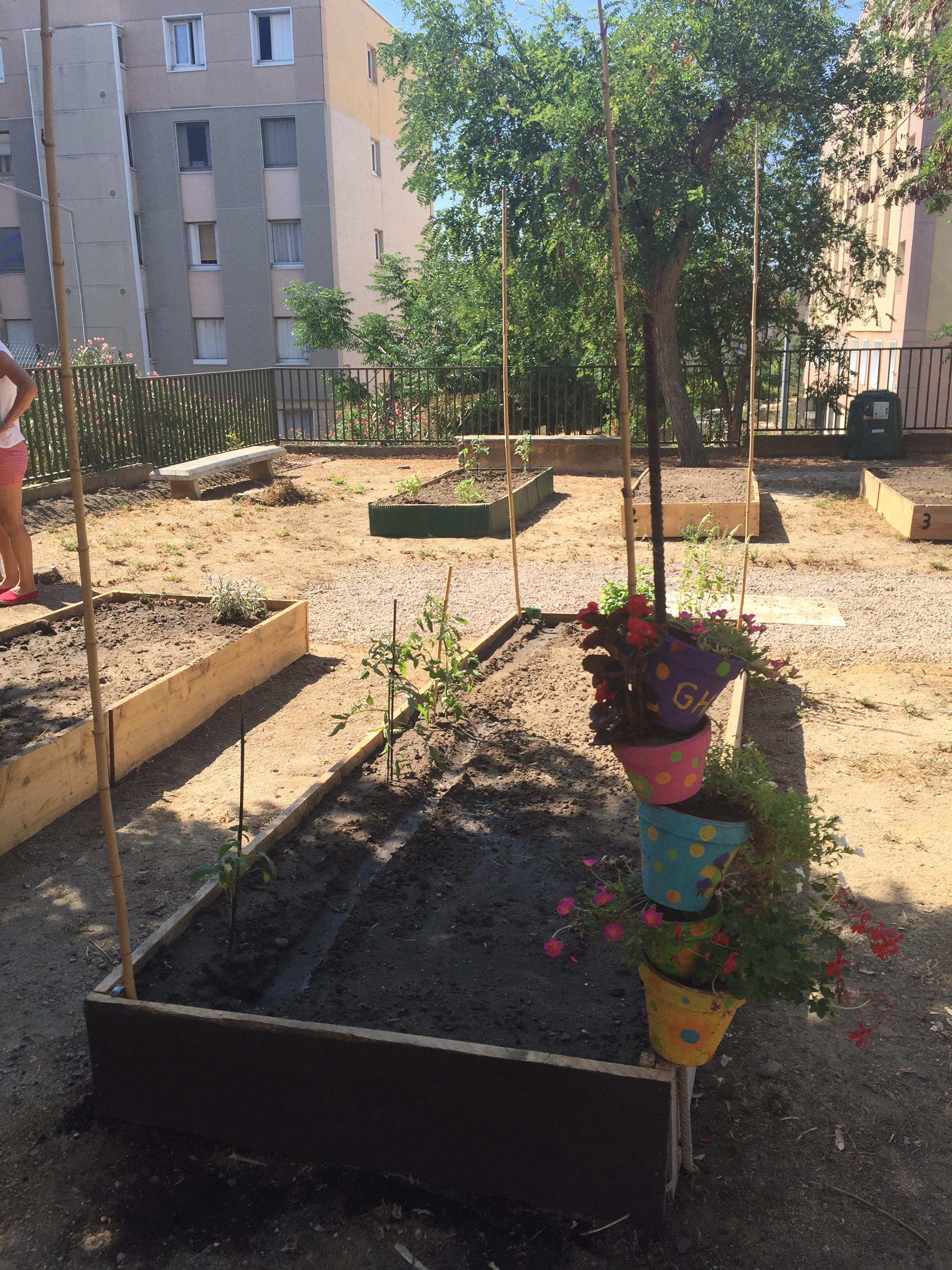 Entraide et amitié fleurissent dans le premier potager partagé de Bastia