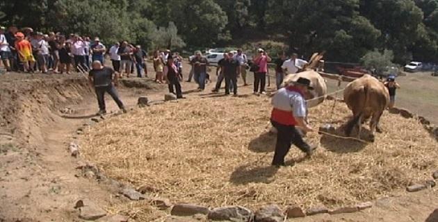 Fête de la terre et savoir faire ancestral ce 7 août à Corrano