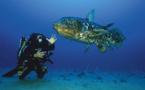 Lumiu : Une projection sous-marine en présence de Laurent Ballesta