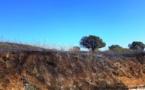 Mezzavia : 2 hectares d'herbes sèches détruits par un incendie