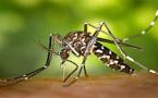 Collectivité de Corse et ARS : Front commun face aux moustiques