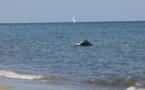 Crash de San Giulianu : L'avion mettait le cap sur l'Ile d'Elbe