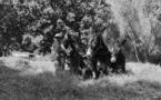 Tribbiera in Lumiu, ritornu à e radiche di l'antichi