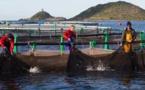 Europe : De nouvelles mesures pour la pêche et le secteur maritime face aux nouveaux enjeux ?