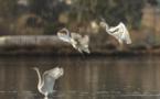 L'étang de Chjurlinu, paradis des oiseaux
