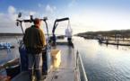 Acquacultura : l'Università di Corsica-CNRS è l'acquacultori corsi facenu a scumessa di a qualità