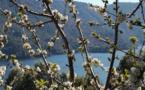 La météo du mercredi 8 Mai en Corse
