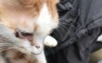 Des dizaines d'animaux retrouvés dans un appartement de la rue Droite à Bastia